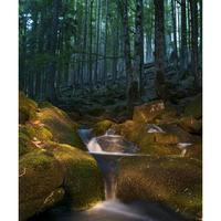 Bayerischer Wald Germany Landscape Europe Elise-Photography.nl
